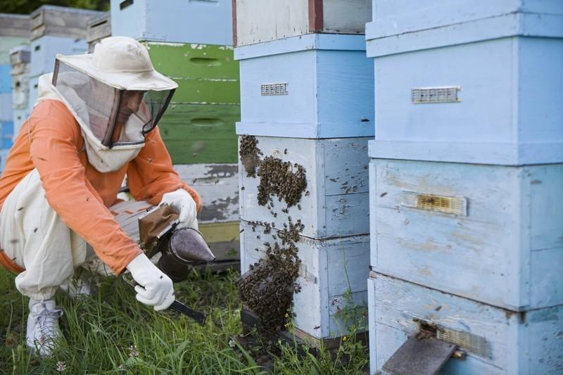 Šah mat za varou ili za pčelu?