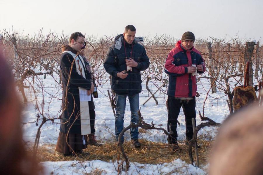 Vinkovo u Iloku obećava potoke iločkog vina i gastro delicija