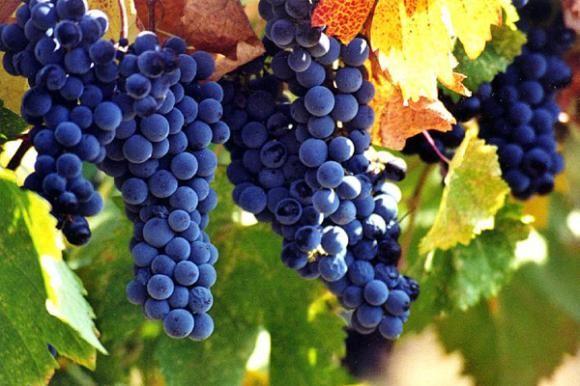 Osijek Wine fest - spoj vina i delicija