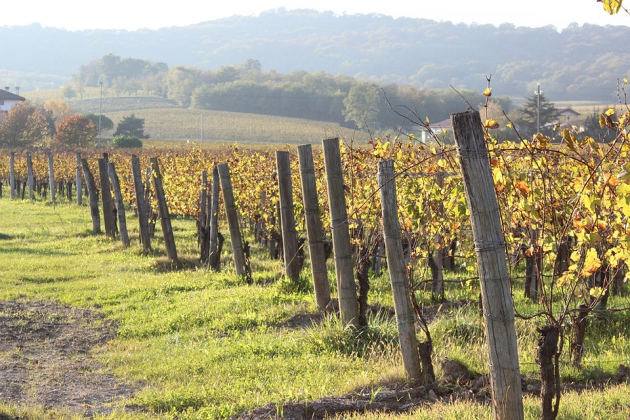 Nega organskog vinograda