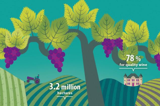 30% EU vinograda se nalazi u Španjolskoj
