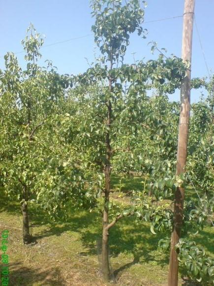 Pravo vreme za sadnju i za zaštitu voćnjaka