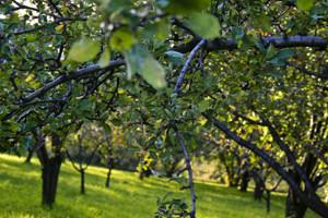 Zimsko prskanje voćaka i vinove loze