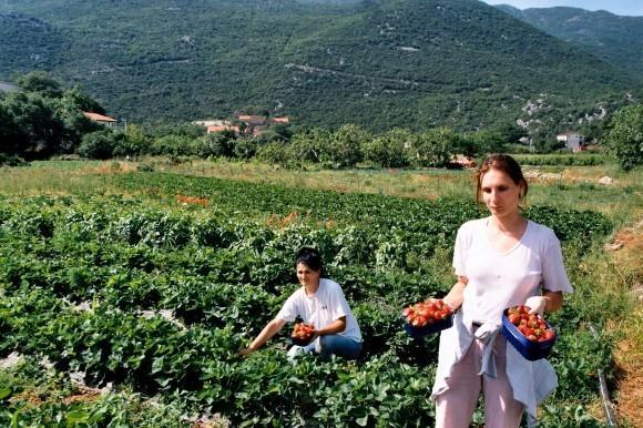 Agroekologija - nova strategija rada na zemlji!
