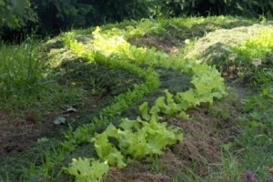 Permakultura: Vrt u skladu s prirodom!