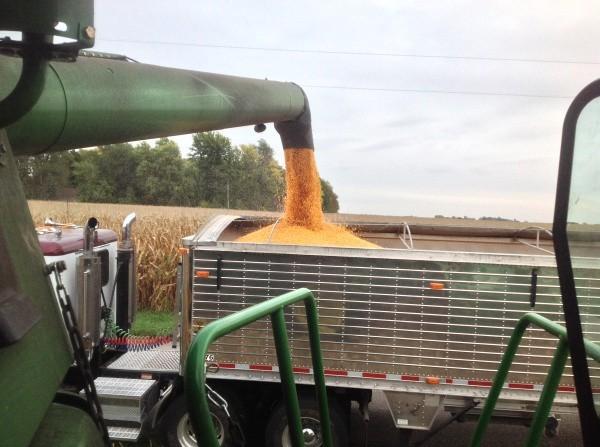 Prednosti i industrijska korist voštanog kukuruza
