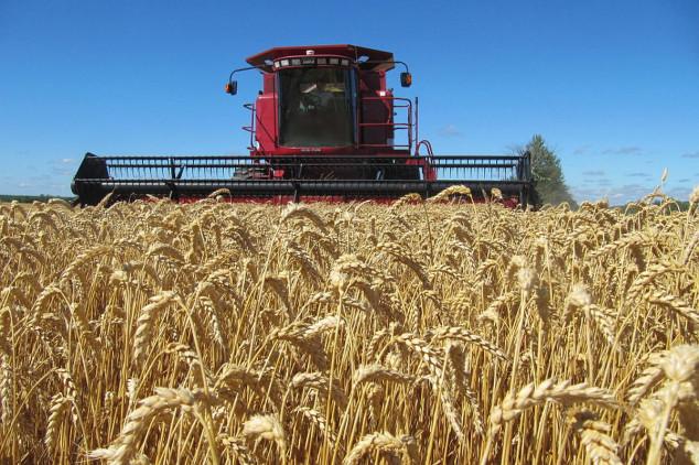 Nastavljen pad cijena ruske pšenice