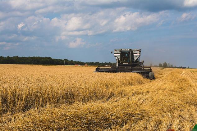 Blagi rast izvoznih cena ruske pšenice