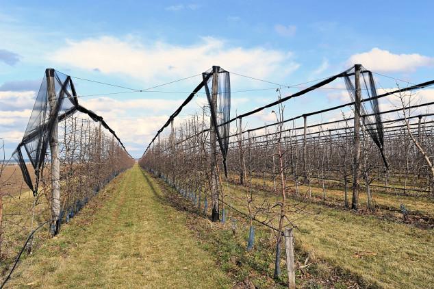 Podsticaji: voćnjaci, vinogradi, hmelj