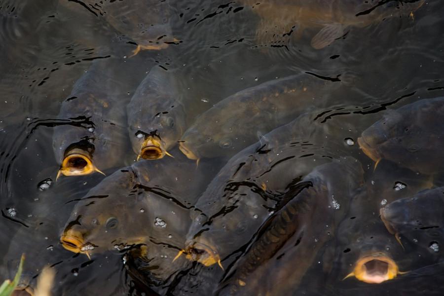 Prva srpska ribarska zadruga