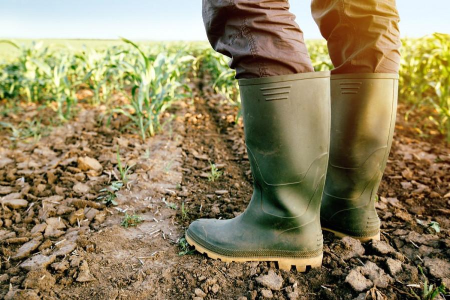 Prihvaćen konačni prijedlog Zakona o poljoprivrednom zemljištu