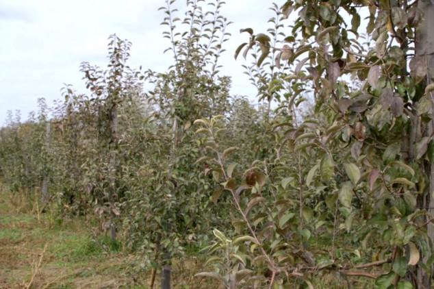 Poljoprivredno zemljište koje to više nije