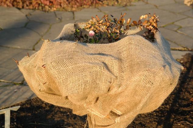 Slama, seno i lišće štite biljke od hladnoće