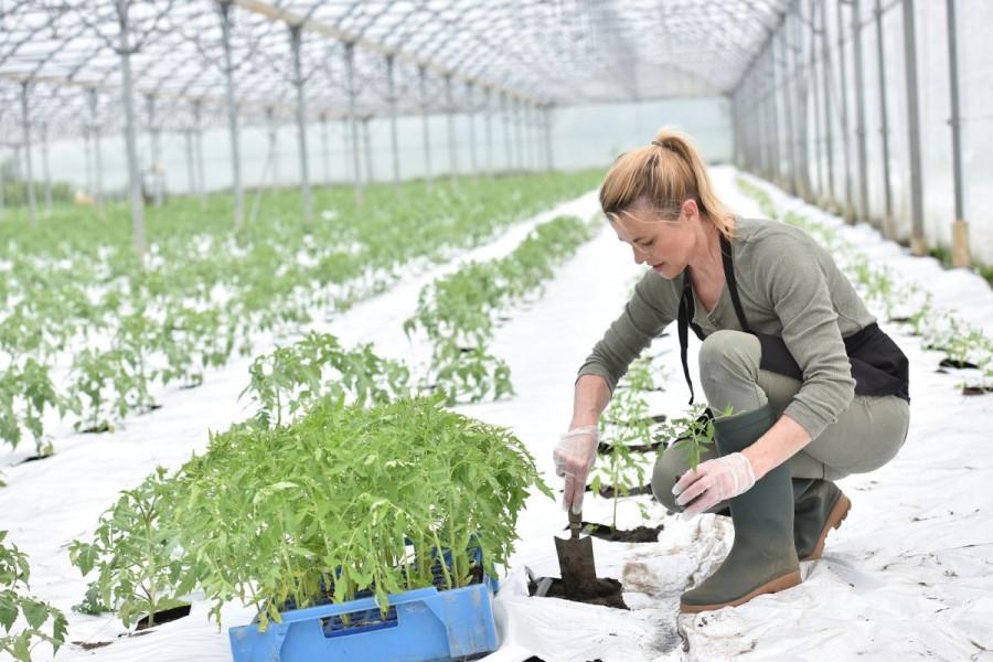 Neophodna zaštita bilja od hladnoće
