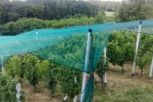 Protugradne mreže za vinograde i voćnjake