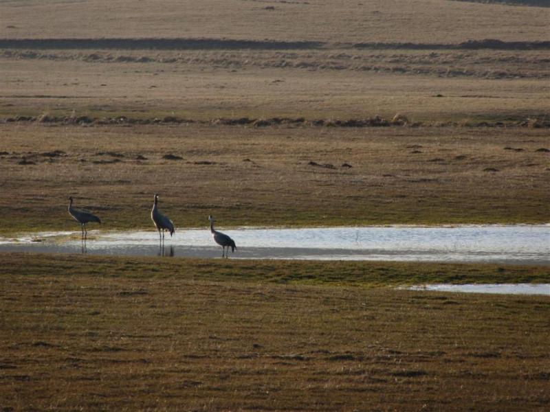 Na putu ka sjeveru ždralovi odmorili na Kupresu