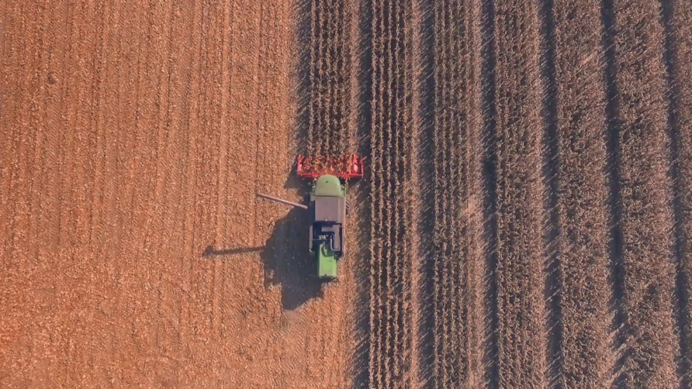 KWS REPORT: Žetva kukuruza u tijeku diljem RH!