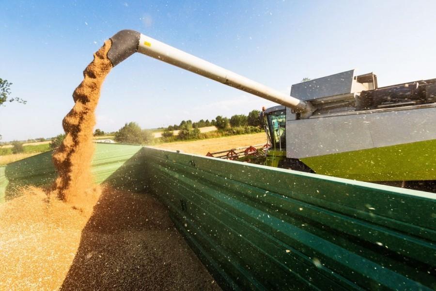 Britanski izvoz žitarica najveći od 2000.
