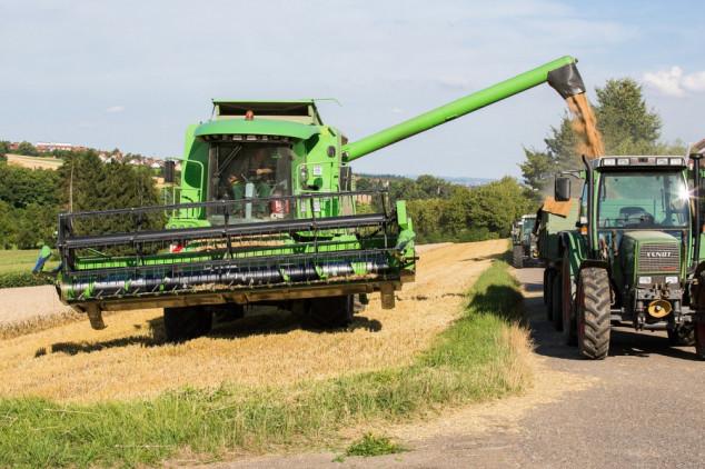 Oporavlja se proizvodnja žitarica, i dalje ispod prosjeka
