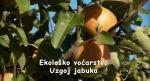 Ekološko voćarstvo - uzgoj jabuka